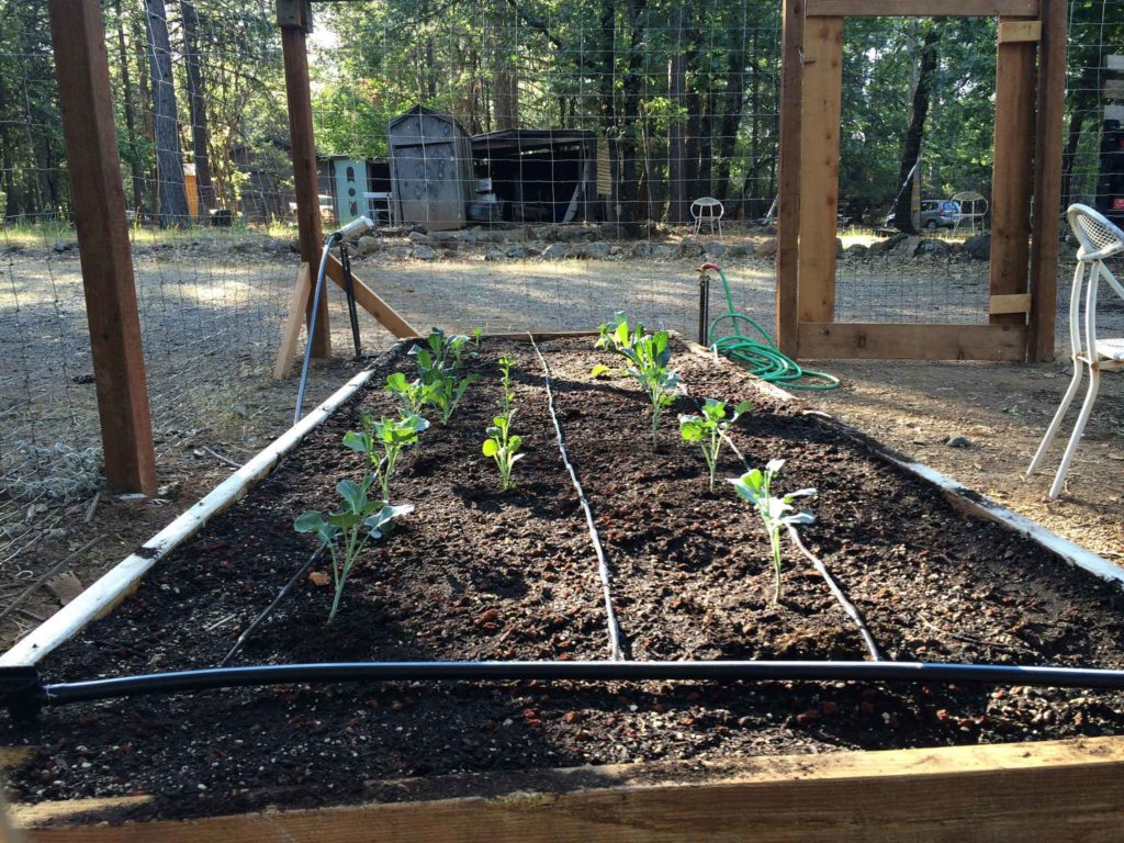 Raised Garden Bed with soaker hoses