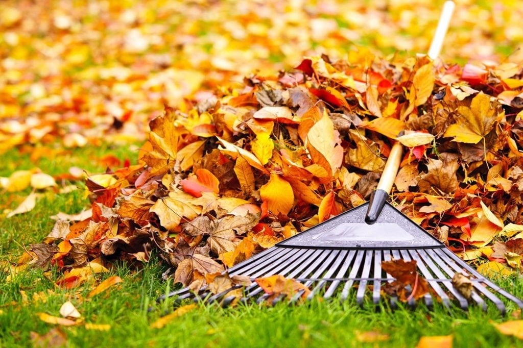 Raking leaves, a chore that we all know too well in Iowa.