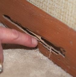 Signs of termites can show up on the base boards of your home.