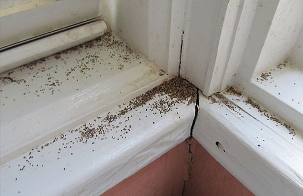 Termite infestation, eats away at this Iowa home's window trim.