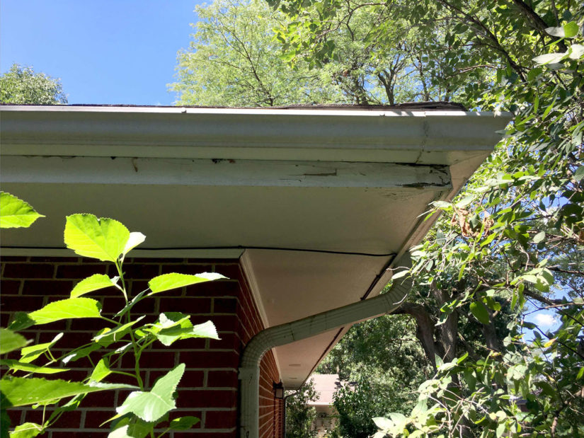 The fascia board was damaged from rainwater overflowing behind the gutter.