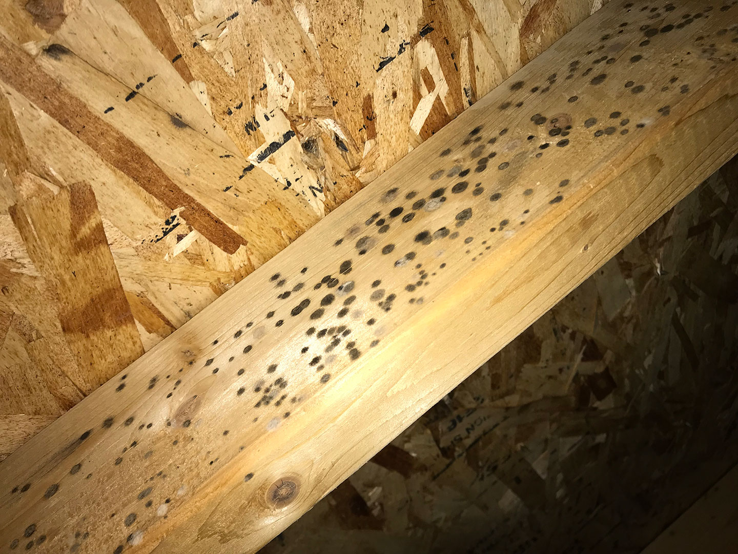 mold on home wood beam