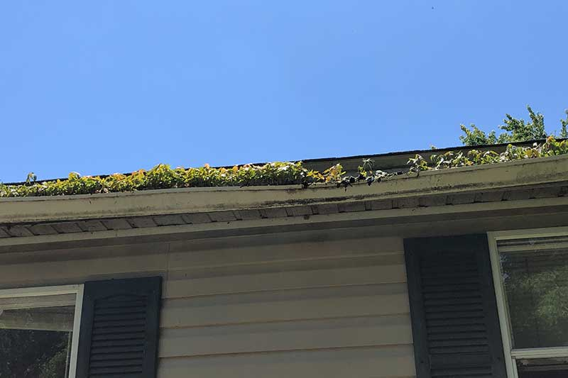 open style gutter filled with leaves